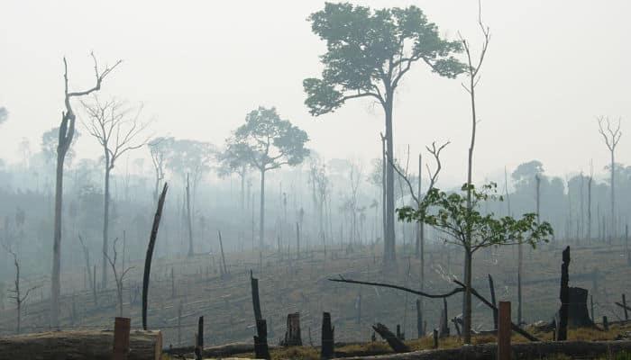 Consecuencias de No Cuidar el Medio Ambiente