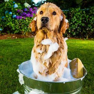 Jabón para la sarna en perros