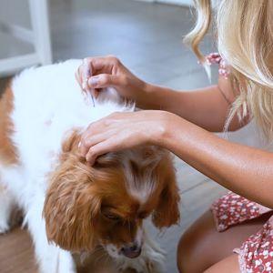 tratamientos tópicos para la sarna en perros