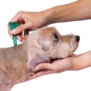 Quitar garrapatas en perros