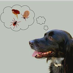 Remedios caseros para garrapatas en perros