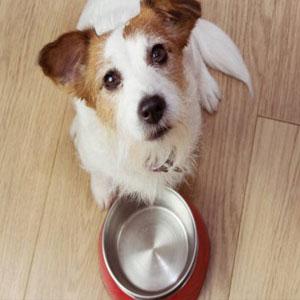 El ayudo ayudará a que tu perro mejore