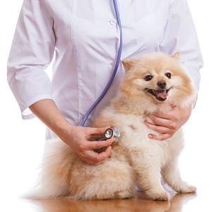 cómo se diagnostica el moquillo en perros
