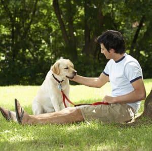 contagio de la leishmaniasis de perros a humanos