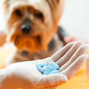 medicamentos para el moquillo canino