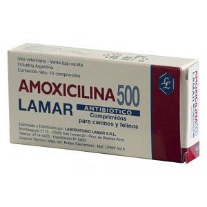 Antibióticos para la diarrea en perros