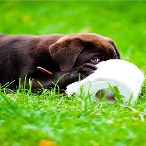 Cuidados Para Un Perro Con Diarrea