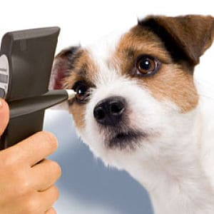 Diagnóstico De La Conjuntivitis En Perros