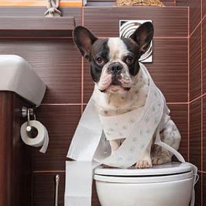 Remedios Caseros Para La Diarrea En Perros