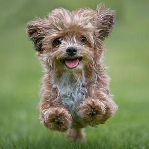 Remedios Caseros para los Parásitos en Perros