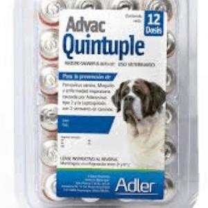 Vacuna quíntuple para perros