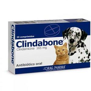 antibióticos para la otitis en perros