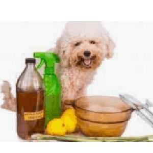 Desparasitante natural para perros