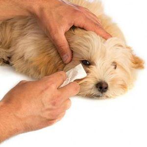 remedios caseros para la conjuntivitis en perros