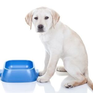 remedios caseros para la diarrea con sangre en perros