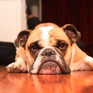síntomas de parásitos en perros