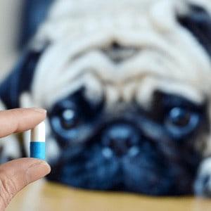 tratamiento para los parásitos en perros