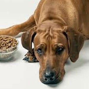 Mi perro tiene diarrea y vómito y no quiere comer