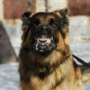 Diagnóstico De La Rabia En Perros