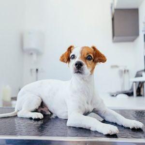 Diagnóstico Del Hipotiroidismo en los Perros