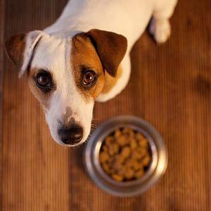 Dieta para la Insuficiencia Renal en los Perros