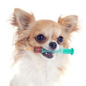 Efectos secundarios de la vacuna para rabia en los perros