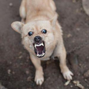 Guía Sobre La Rabia En Perros PDF