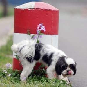 Insuficiencia renal en los perros jóvenes