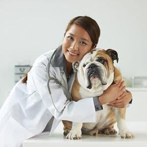 La Insuficiencia Renal en los Perros Tiene Cura