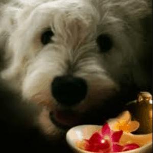 Remedios caseros para las cataratas en perros