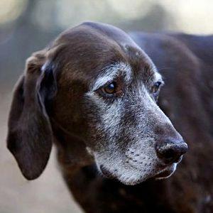 Tipos de insuficiencia renal en los perros