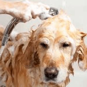 Tratamientos más comunes para ácaros en perros