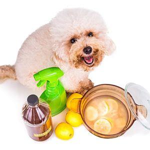 Vinagre para las pulgas en perros