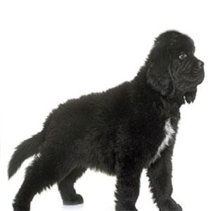 Cómo detectar a tiempo la displasia de cadera en perros