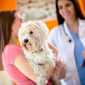 heridas por pulgas en perros