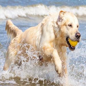 Tratamientos más efectivos para la displasia de cadera en perros