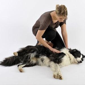 Tratamientos naturales para la epilepsia en perros
