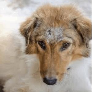 Cáncer de piel en los perros