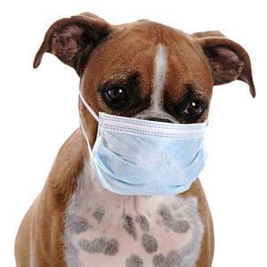 Cómo se transmite la gripe en los perros