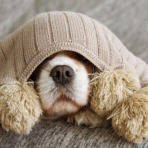 Complicaciones del Síndrome de Cushing en los Perros