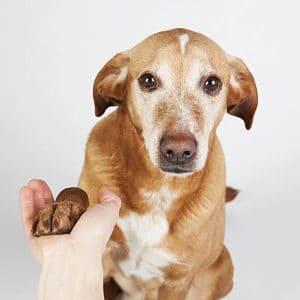 Es el Síndrome de Cushing en los perros Contagioso