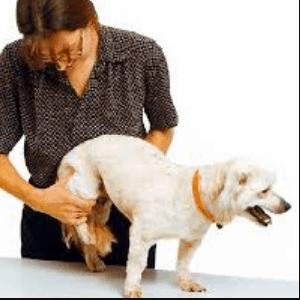 Fisioterapia para la artrosis en los perros