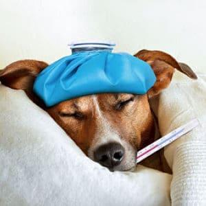 Guía Médica en PDF sobre la Gripe en los Perros
