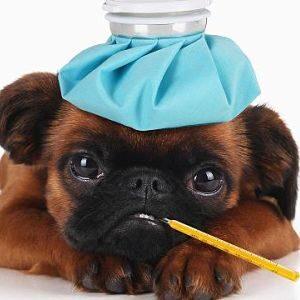 Síntomas de la gripe en los perros