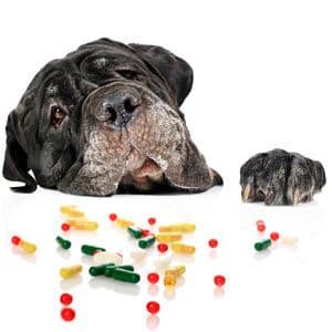 Tratamiento Médico para el Síndrome de Cushing en los Perros
