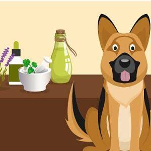 Tratamientos naturales para el Síndrome de Cushing en los perros