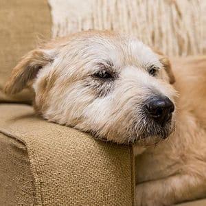 cáncer en los perros