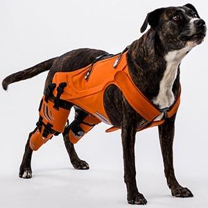 Cómo curar la displasia de cadera en perros