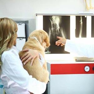 Grados de la displasia de cadera en perros
