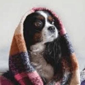 Remedios caseros para la ansiedad por separación en los perros